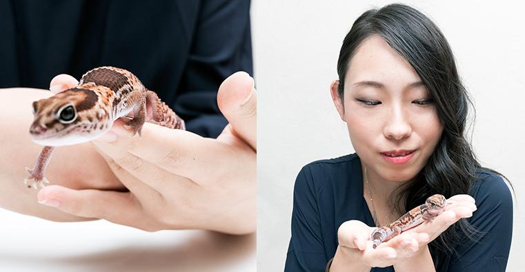 佐藤さんが飼っているヤモリの「ニシアフリカトカゲモドキ」。アフリカに生息している