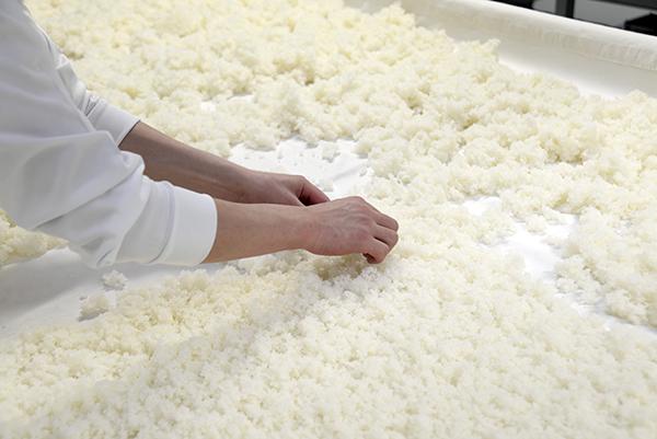 種付けの様子。手作業でていねいにまんべんなく麹菌を米にまぶしながら、米の乾燥具合や温度を手に感じて作業を行う。データは参照するが、最後は手の感覚が重要になる。